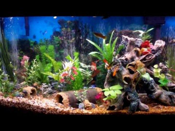 Beautiful Fish Tank Aquarium Decor With Colorful Plant Ideas