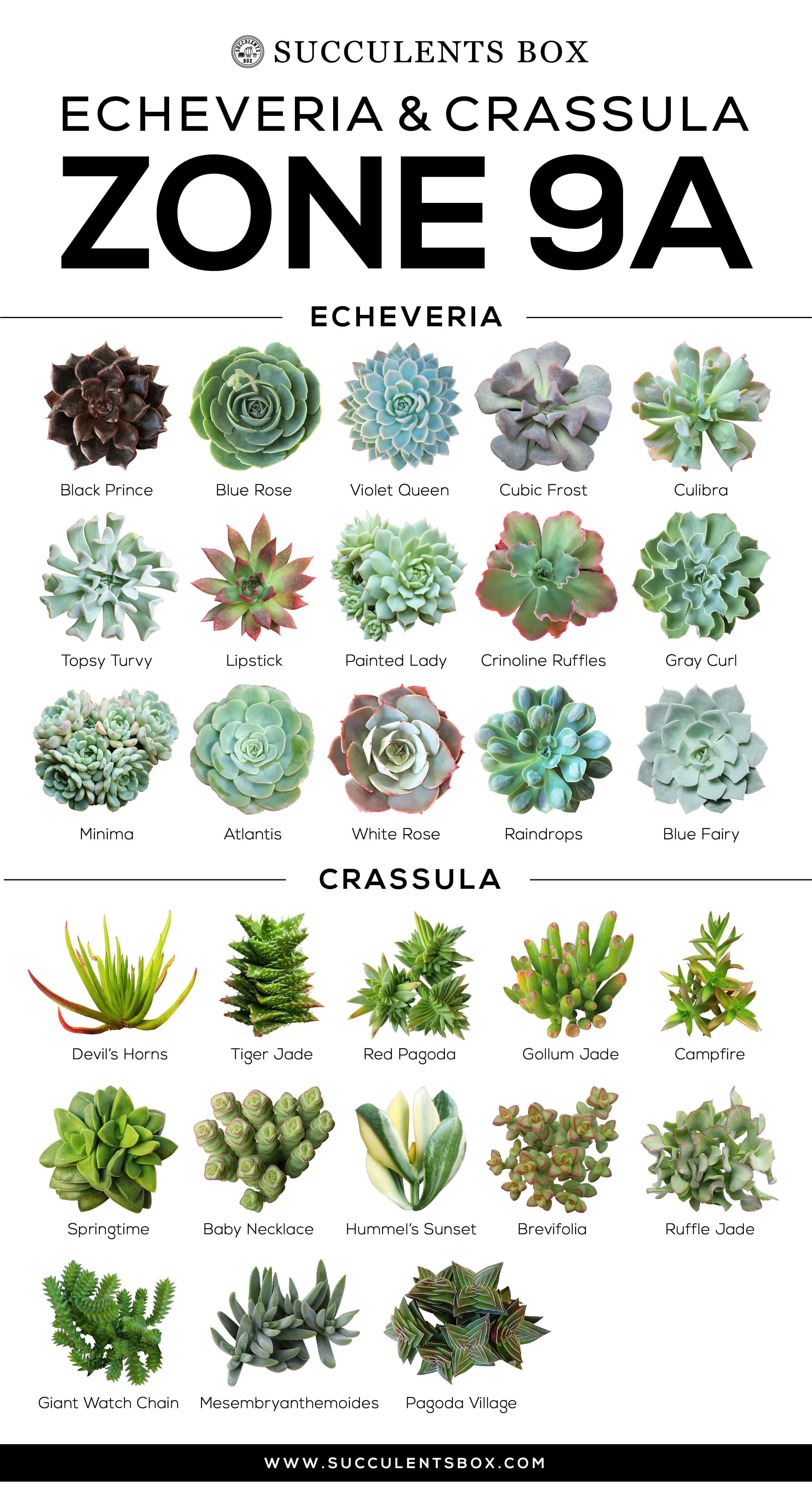 Choosing Succulents For Zone 9 California Florida And Arizona