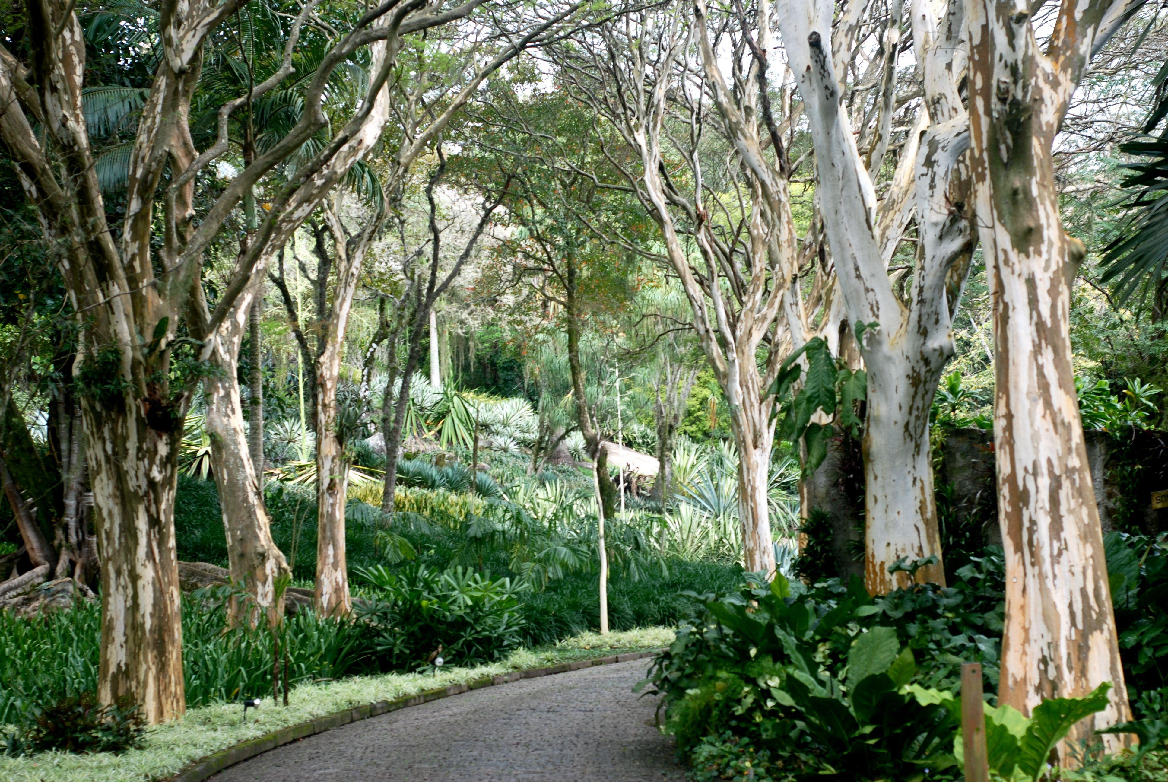 Roberto burle marx rio de janeiro garden pictures for Pflanzengestaltung garten
