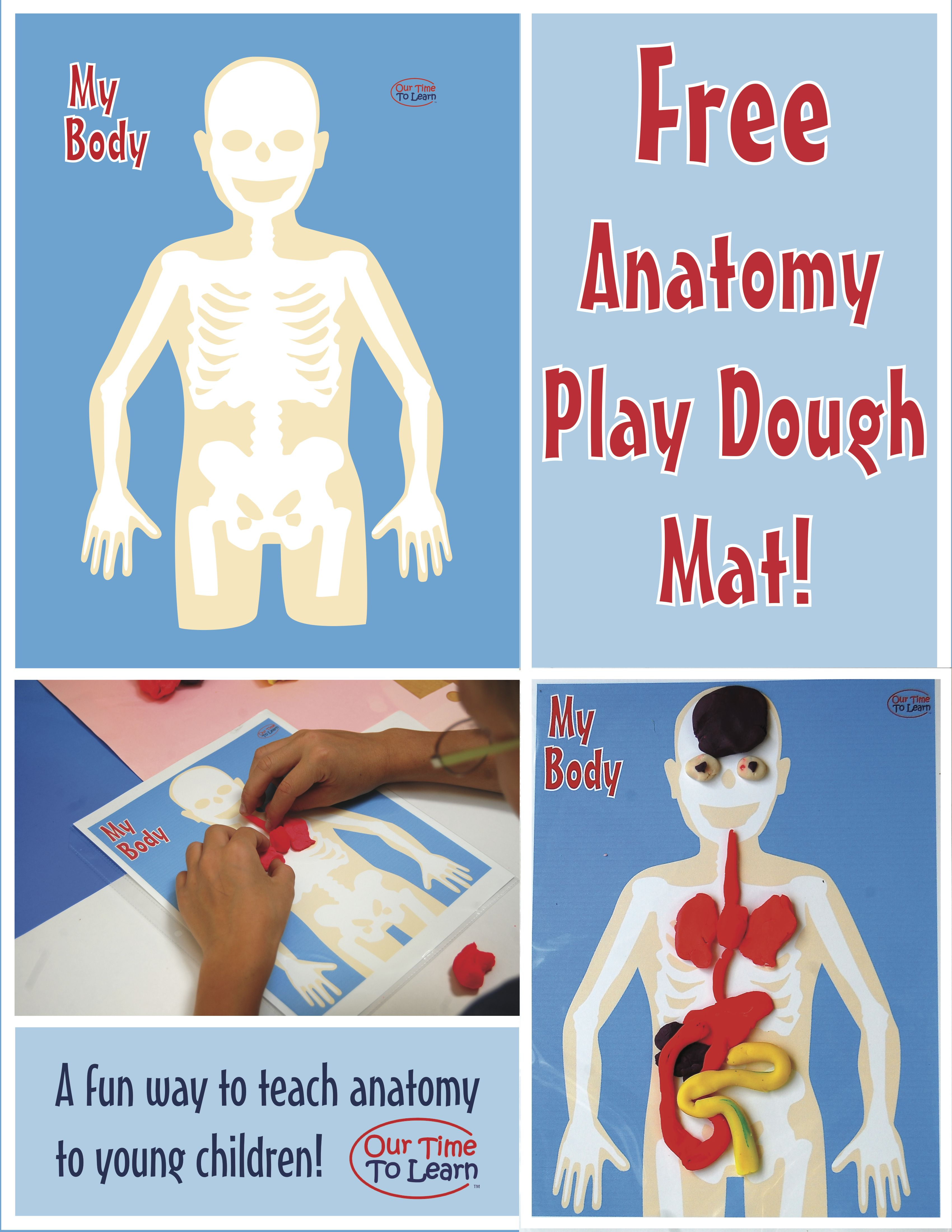 Human Bodyanatomy Teaching Tool Make Play Dough Organs And Put