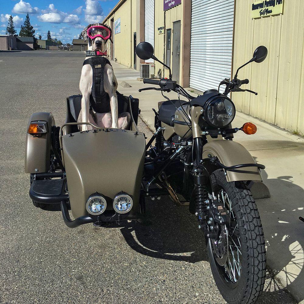 Ural Motorcycle, Sidecar, Biker Dog