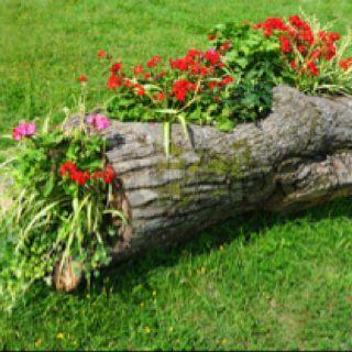 Fallen log planter