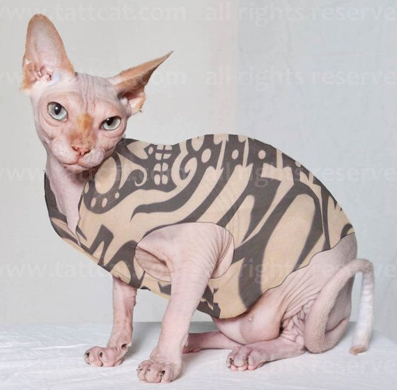 The sugar skeleton tattcat tattoo inspired sphynx cat for Hairless cat tattoo