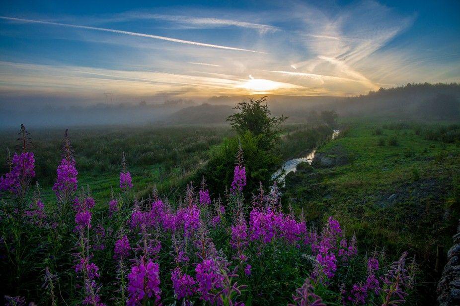 """Photo """"PurpleFog"""" by naoisekelly"""