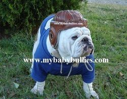 Rocky In Leatherheads The Movie English Bulldog Bullying