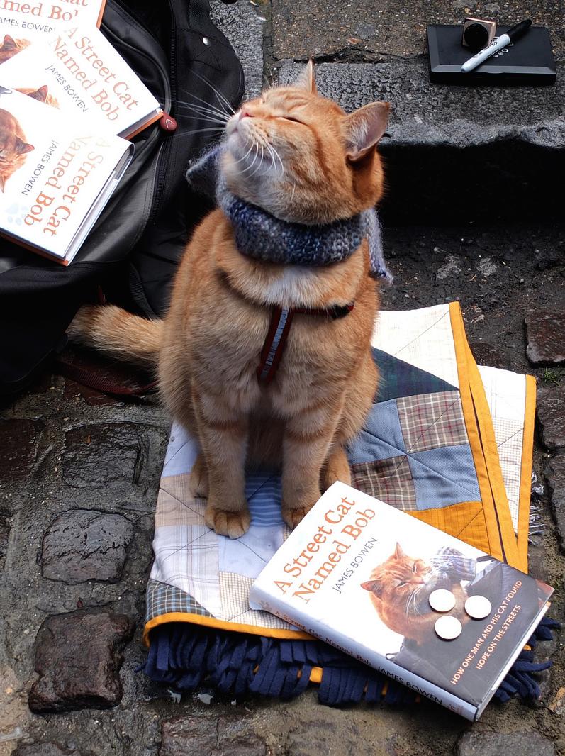 street cat named bob pdf