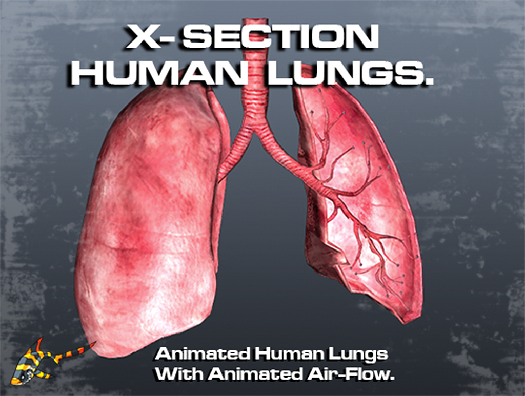 Animated Human Lungs 3d Model Download Royalty Free Science And