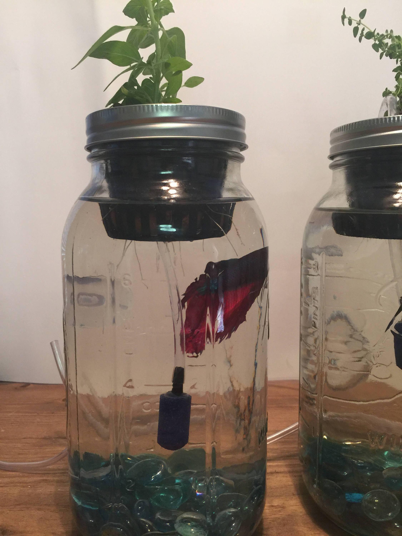 Indoor aquaponics kit/Mason jar aquaponics system/indoor ...