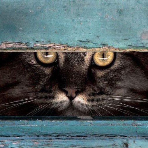Olhar de gato...