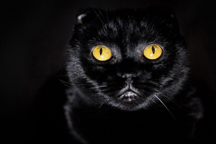 Likefun Me Black And Yellow Color Combinations Black Cat Pictures Yellow Cat Red Cats Eye