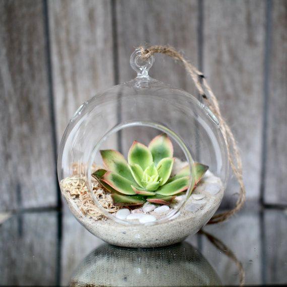 Succulent Glass Terrarium Wedding Favour Bombonieres Hanging Glass