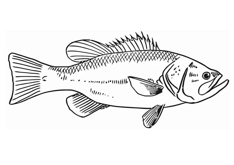Malvorlage Fisch | Malvorlage fisch, Fische zeichnen und ...