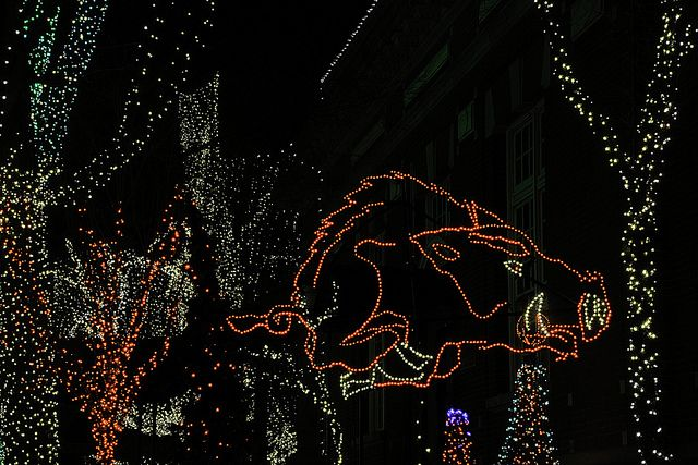 christmas lights fayetteville arkansas christmas lights fayetteville razorback 8547 flickr photo sharing
