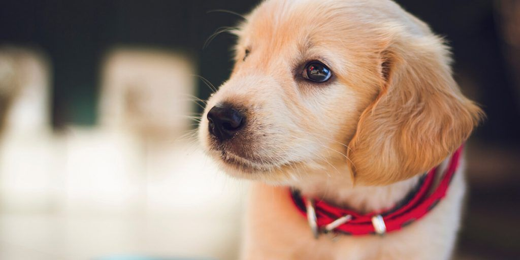 15 adorable puppy announcement ideas how to announce a