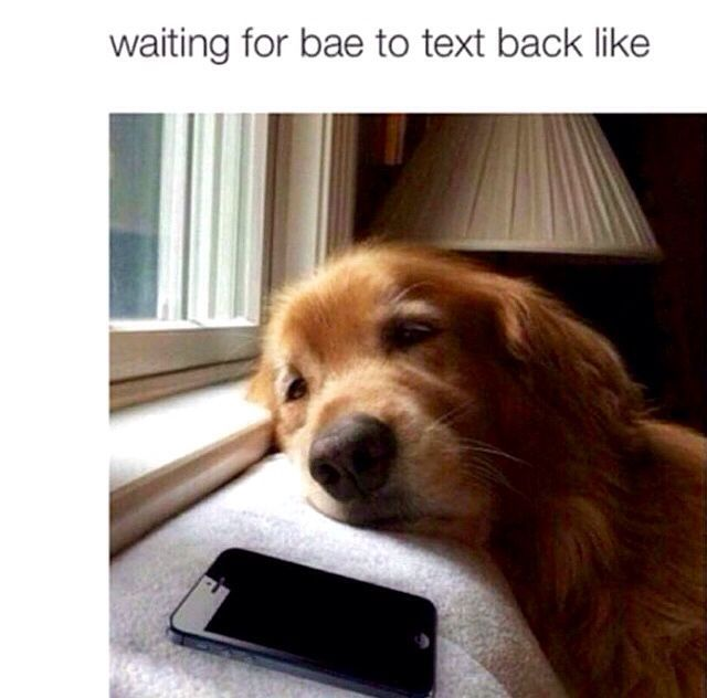 Waiting For Him To Text Back Cute Dog Pictures Golden Retriever Golden Retriever Funny