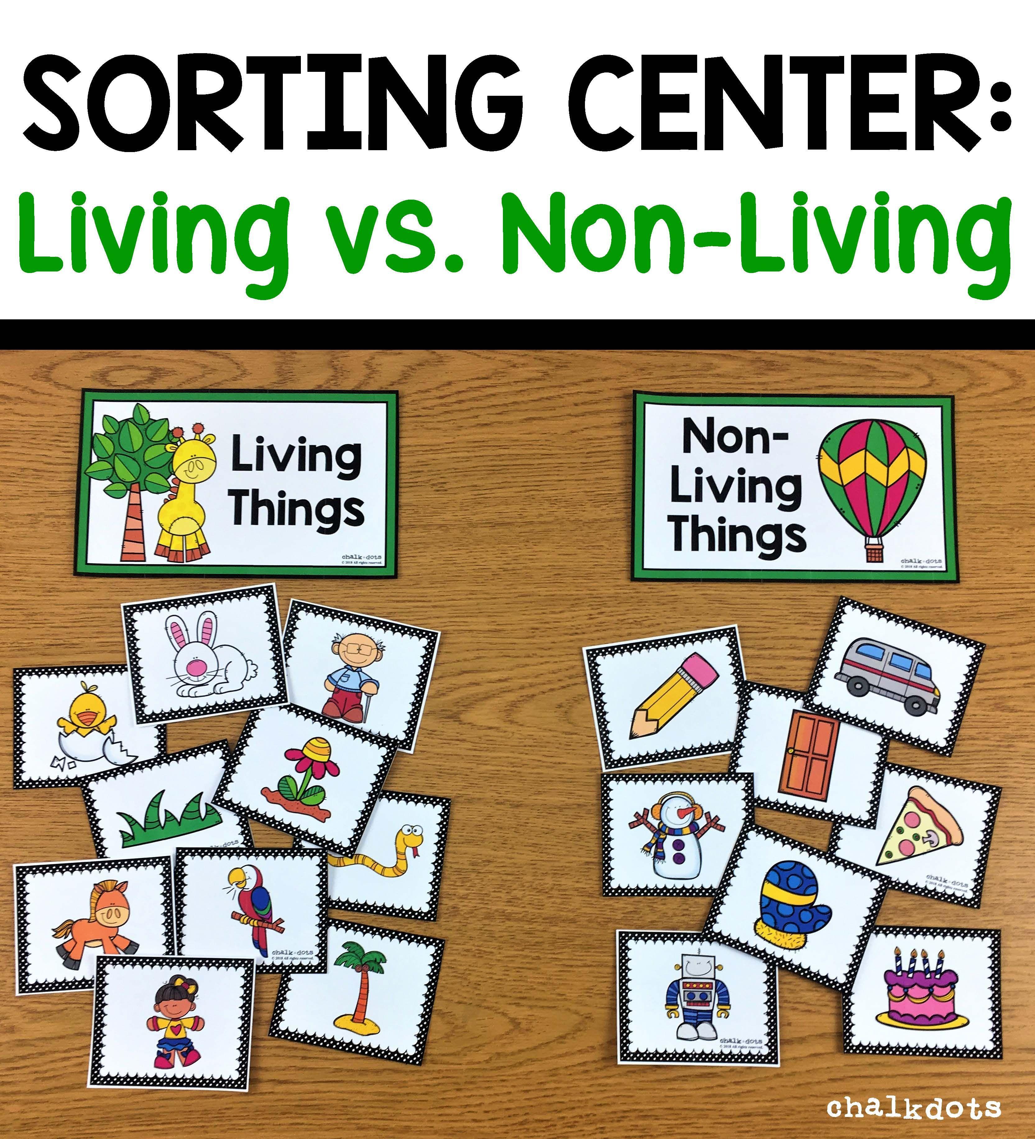 Living Vs Non Living Sorting Preschool Science Kindergarten Science Circle Time Activities [ 3663 x 3330 Pixel ]
