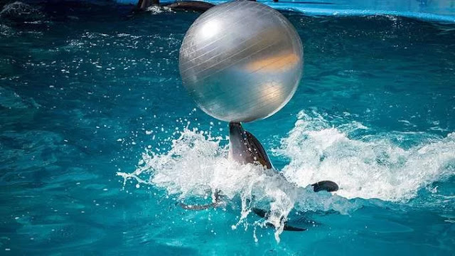 Where guests swim with dolphins to cure illness in