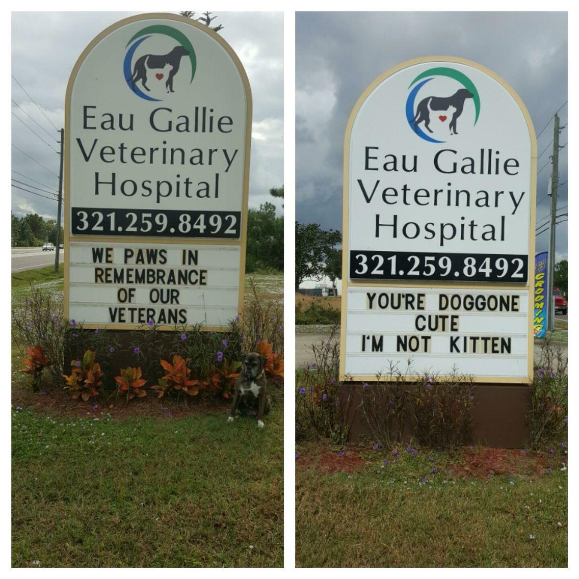 Eau Gallie Vet Clinic Melbourne Florida Vet Clinics Veterinary Humor Vets