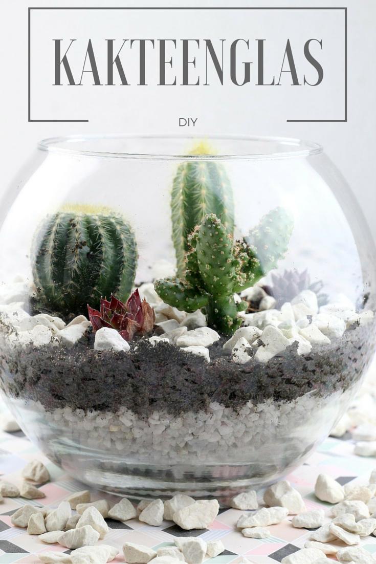 Kaktus im Glas - Deko DIY   Pinterest   Aktuelle trends, Anrichten ...