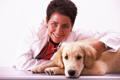 5 Must-Haves for Picking The Perfect Veterinarian