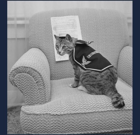"""""""Pooli,"""" who served aboard an attack transport during World War Two, 1959 