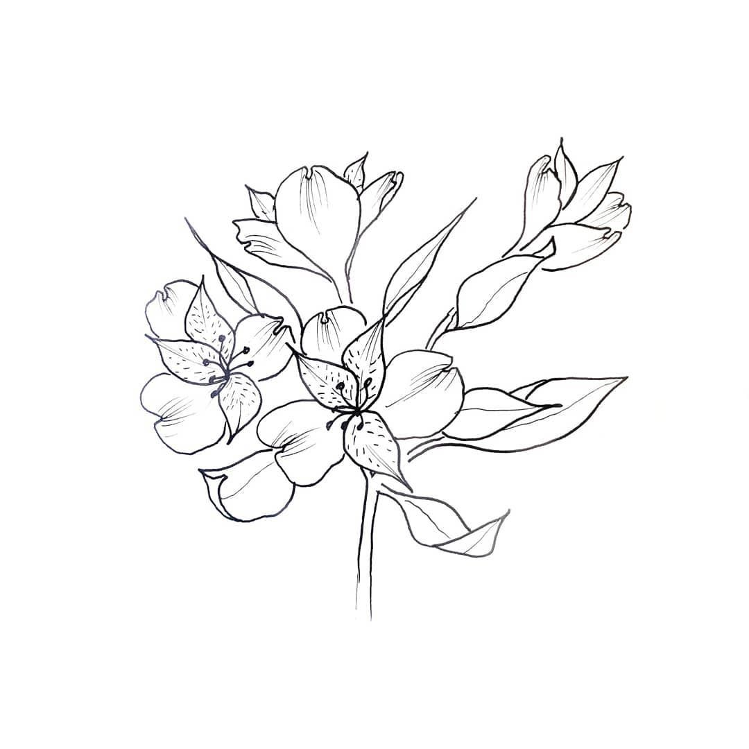 How To Draw An Alstroemeria Aka Peruvian Lily Or Lily Of The Incas These Flowers Come In A Fireworks Display Of Co Peruvian Lilies Flower Boarders Drawings