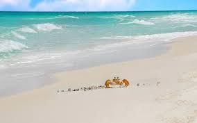 Risultati immagini per sea and beach