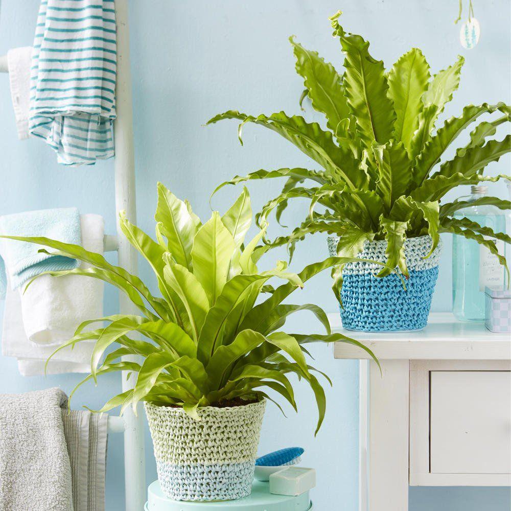 Die Besten Pflanzen Furs Badezimmer Pflanzen Kaktus Tropische Zimmerpflanzen