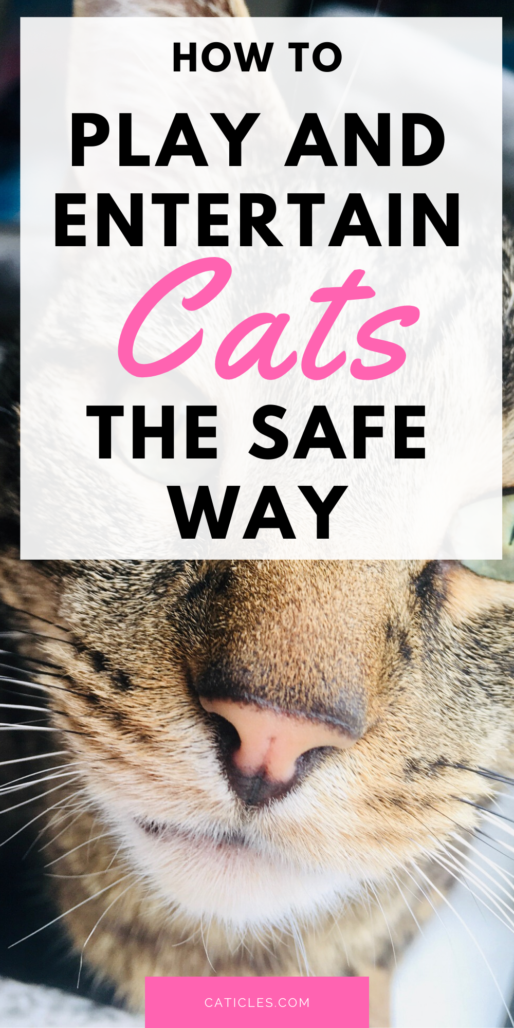 8 Safe Cat Toys And How To Use Them The Right Way Caticles In 2020 Cat Care Cat Care Tips Kitten Care