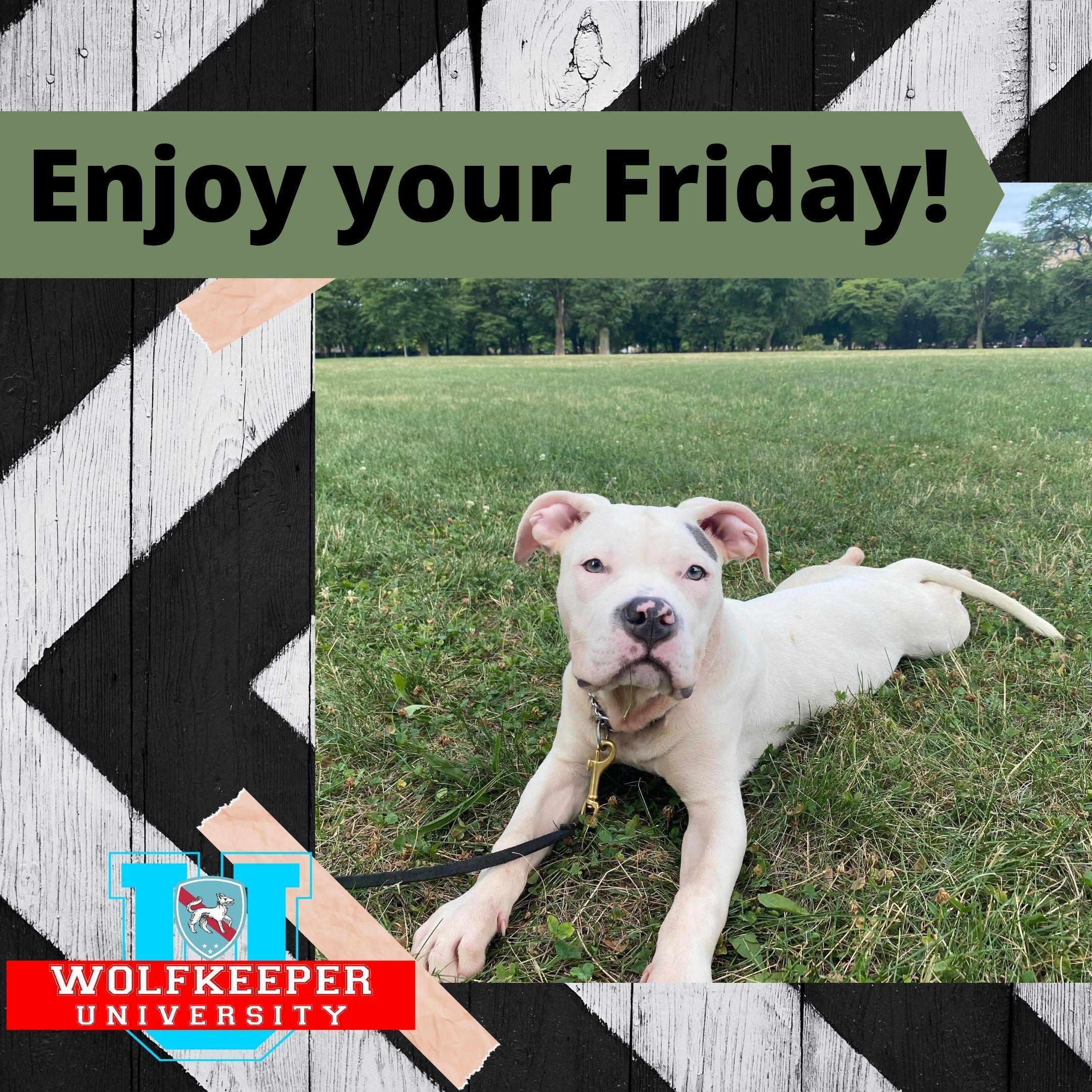 Thank God it's FRIDAY!!!😎 Wolfkeeperuniversity https