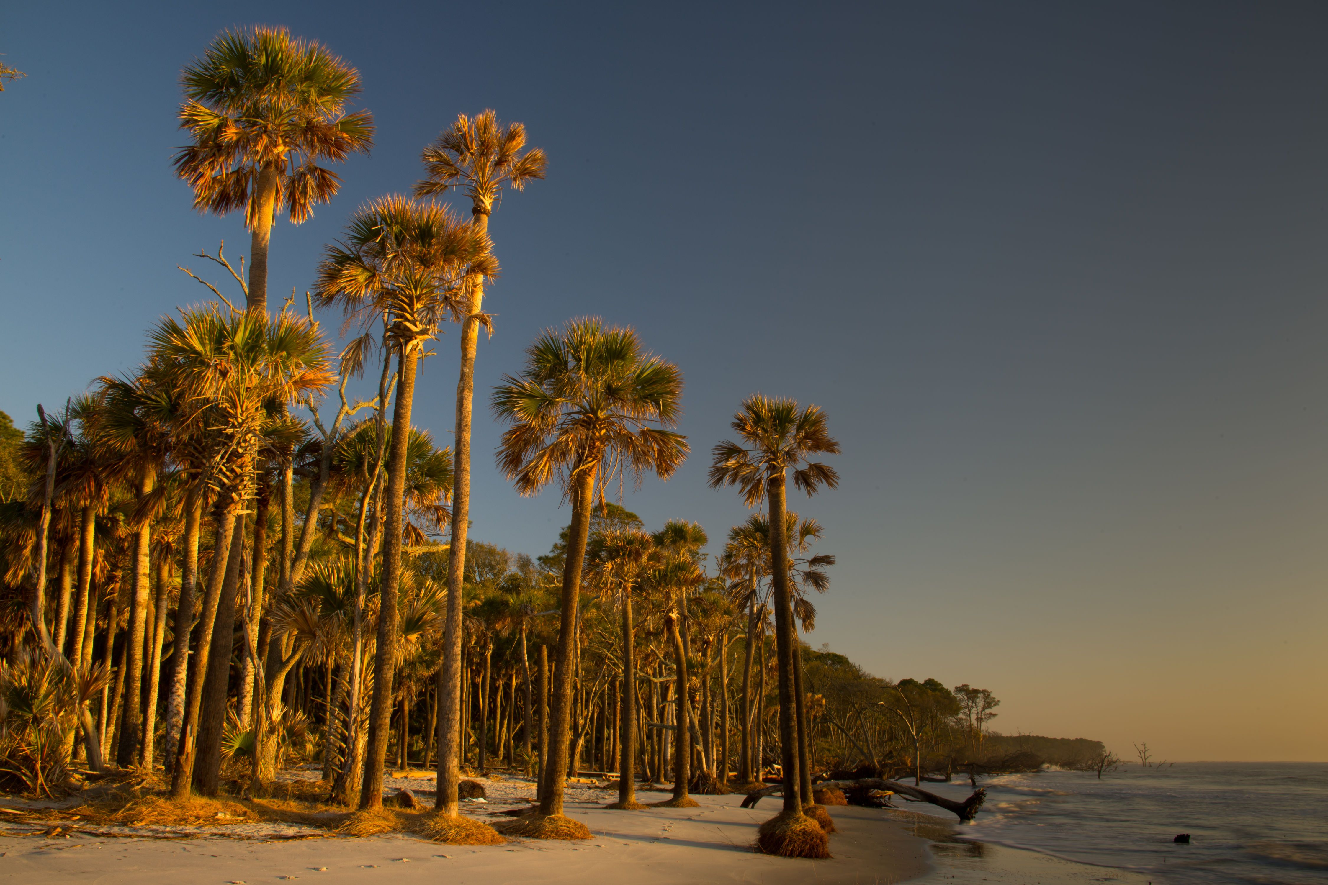 The Best Beaches in South Carolina Most beautiful