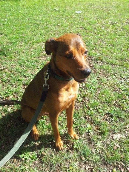 Dexter 2 Year Old Male Cross Breed Available For Adoption Dog
