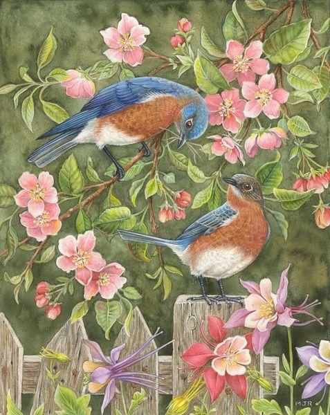 鱼虫的相册-【插画】Lorraine Ryan BIRD PICS Pinterest Birds