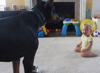 Baby and doberman play - Viral Video of the Week - April 2013 - Central Pennsylvania