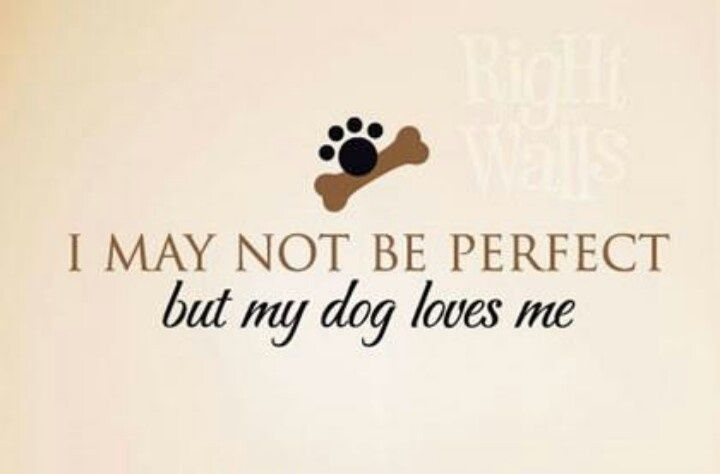 I May Not Be Perfect But My Dog Loves Me Dog Quotes Dog Love