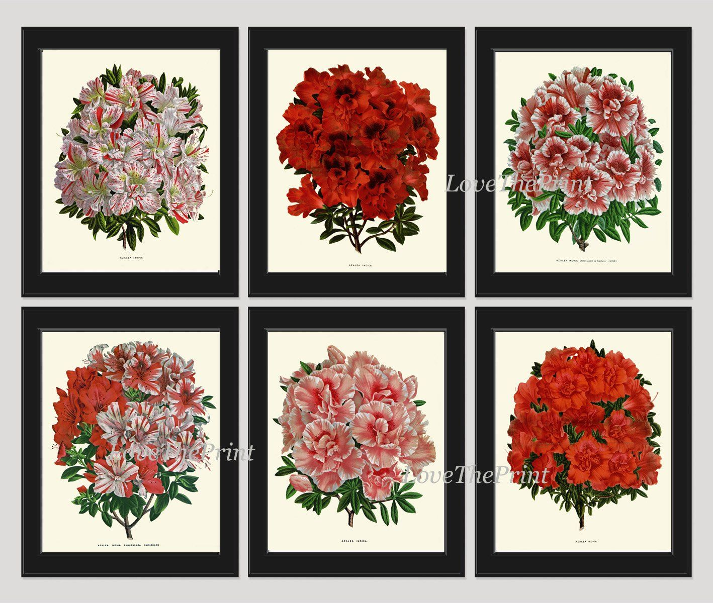 Antique botanical print set of antique beautiful flowers large