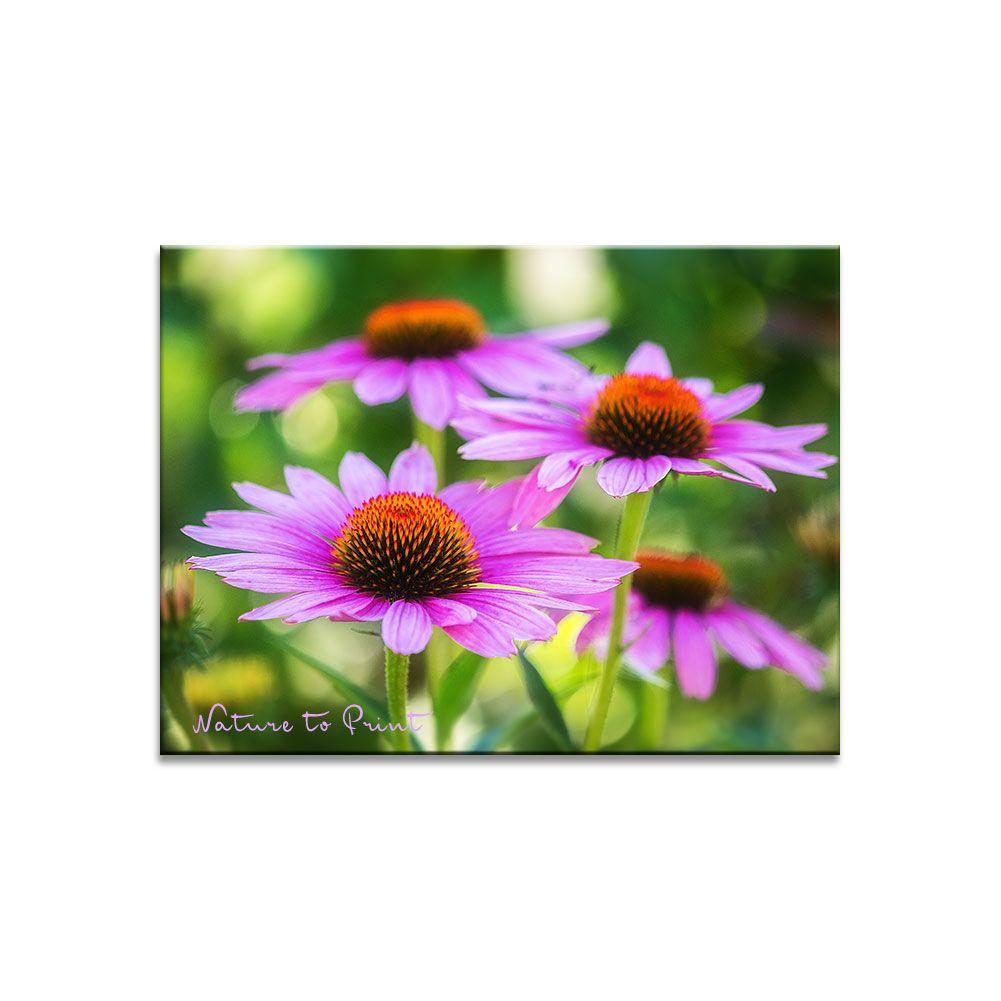 Blumenbild: Für immer Sommer mit Rotem Sonnenhut | Kunstdruck oder Leinwandbild im Wunschformat
