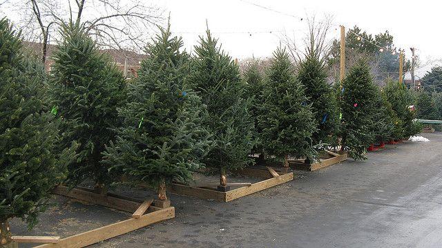 Cartner Christmas Tree Farm | Retail Tree Care - Cartner Christmas Tree Farm Retail Tree Care To The Market