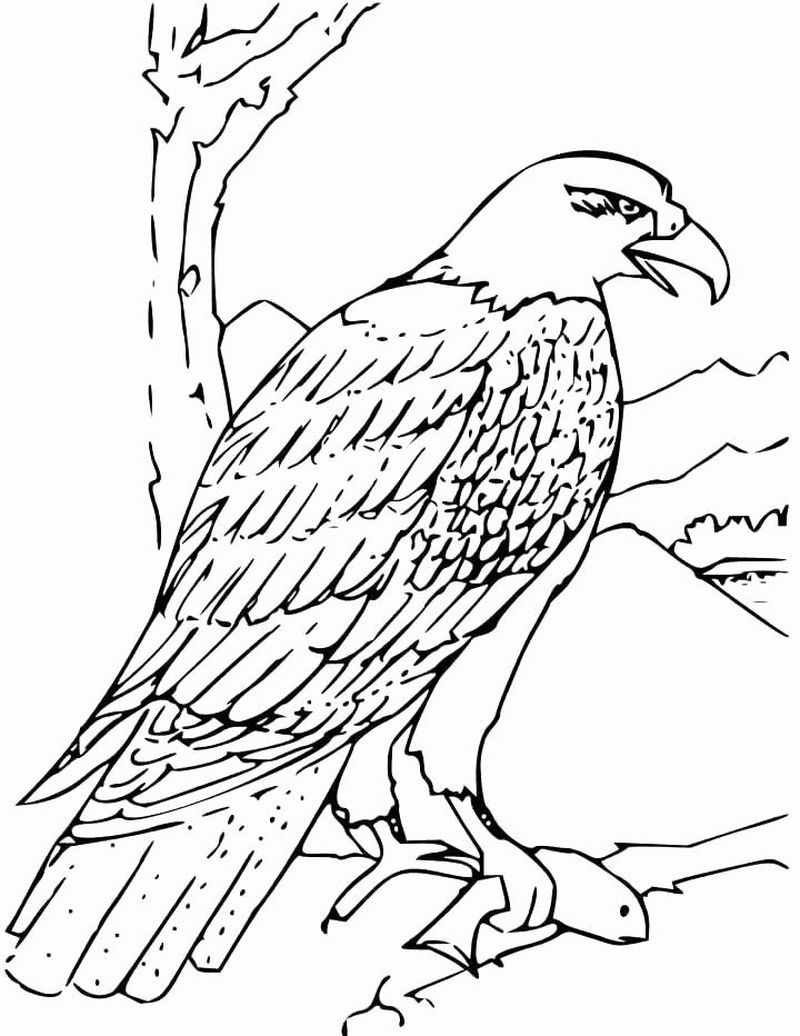 Bald Eagle Coloring Pages Free Fish Coloring Page Bald Eagle Pictures Bird Coloring Pages