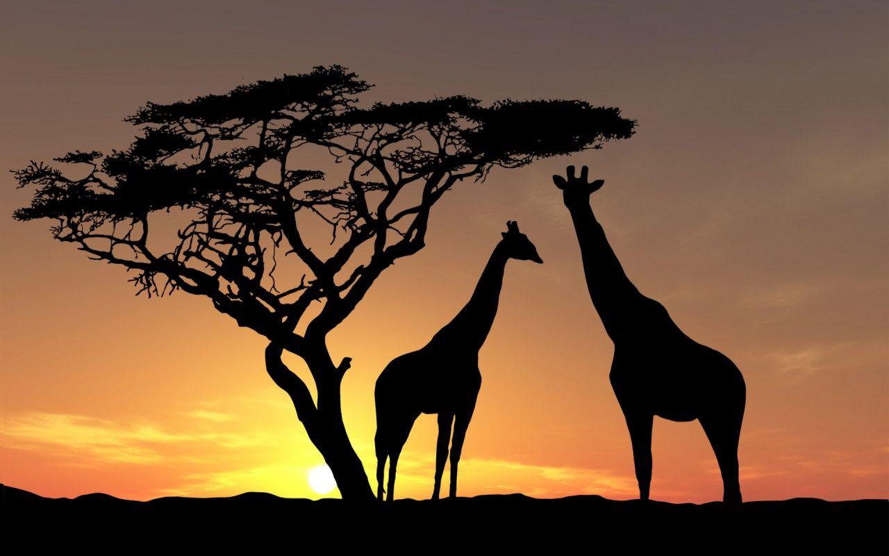 Jirafas Paisajes De Africa Silueta De Jirafa Arte De áfrica