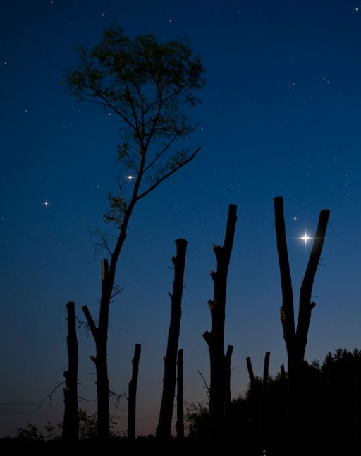 When the sun sets tonight, go outside and look west. The Evening Star, Venus, is not alone. Second-magnitude star El Nath is less than a degree away.