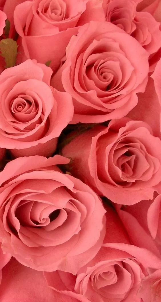 Pin by Danica Thomas-Knowlden on Rosas | Flower iphone ...