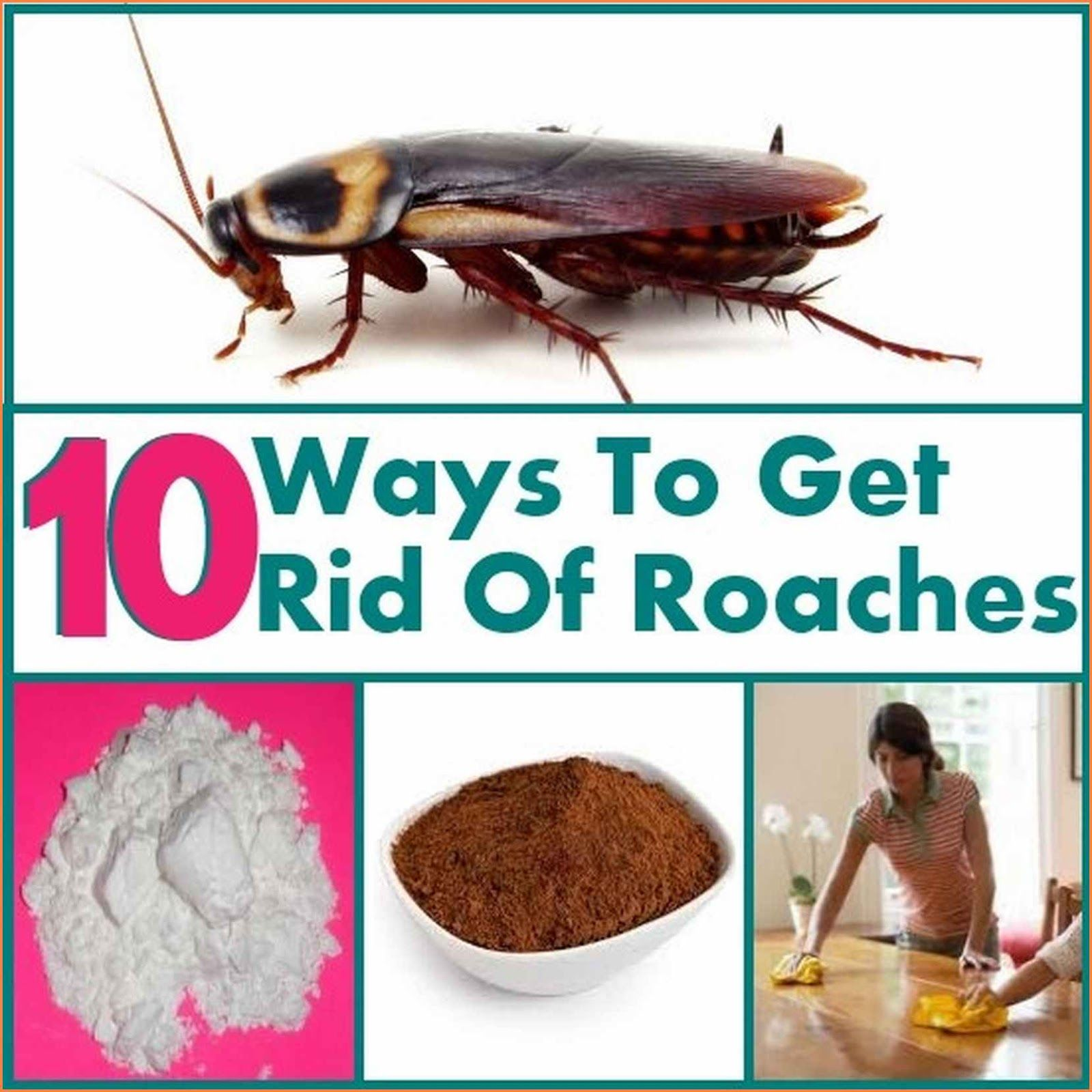 How To Get Rid Of Household Roaches | How To | Pinterest | Roaches ...