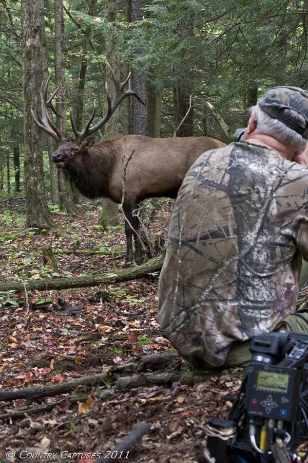 Country Captures: Pennsylvania Elk Harvest Begins
