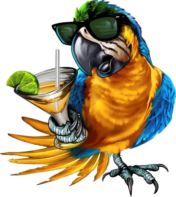 5 O'clock somewhere decal, full color parrot decal ...