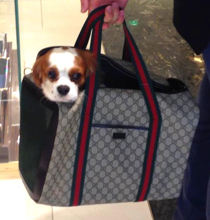 Louis Vuitton, Goyard, Loro Piana et 5 autres marques pour nos chiens: journée shopping — Jetset Soufflé | Votre guide pour voyager avec vos chiens