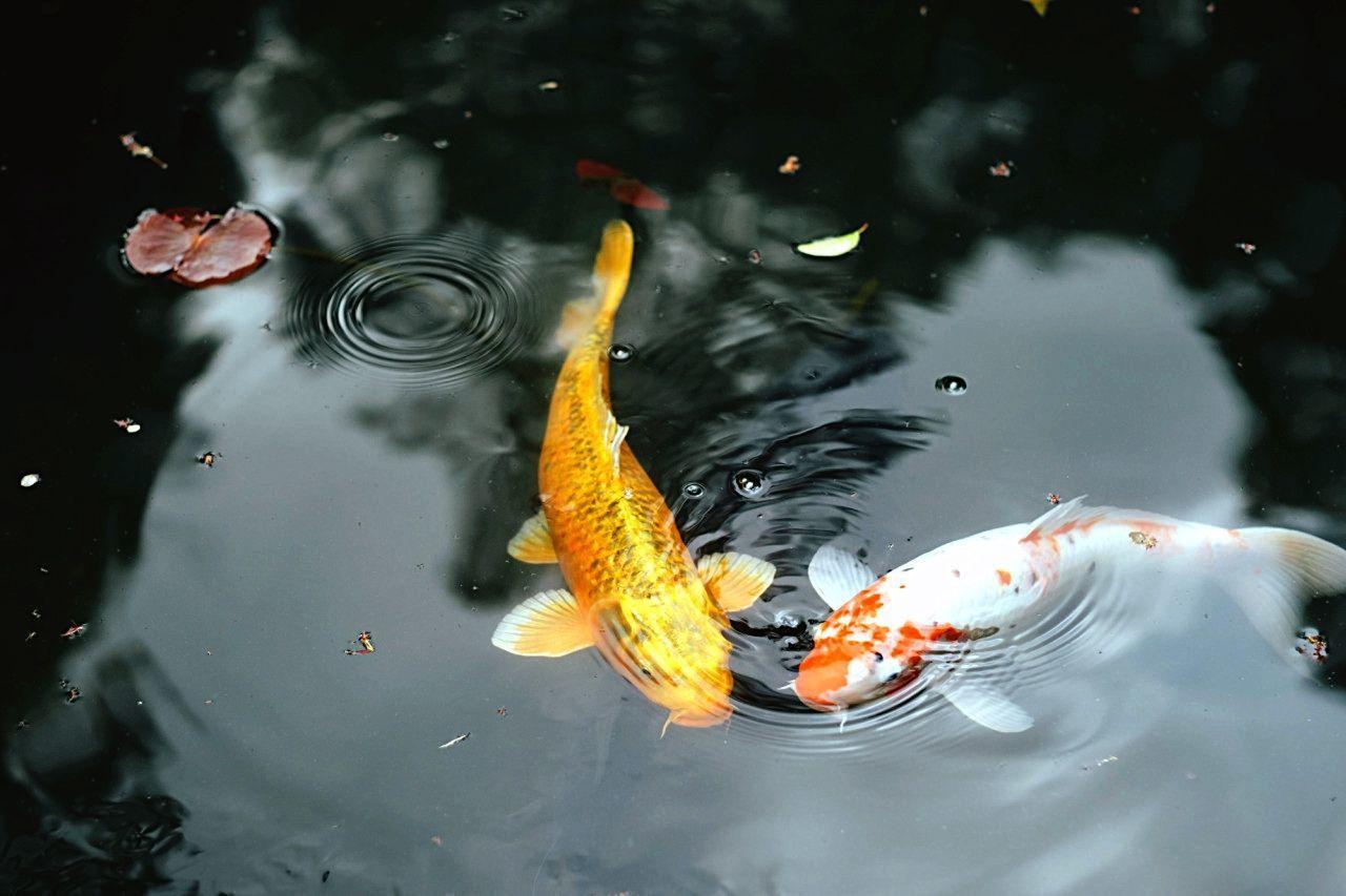 Картинка рыбы плавают в воде
