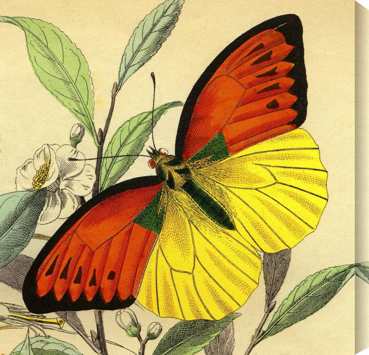 Butterflies Canvas Art | Products | Pinterest | Butterfly canvas and ...