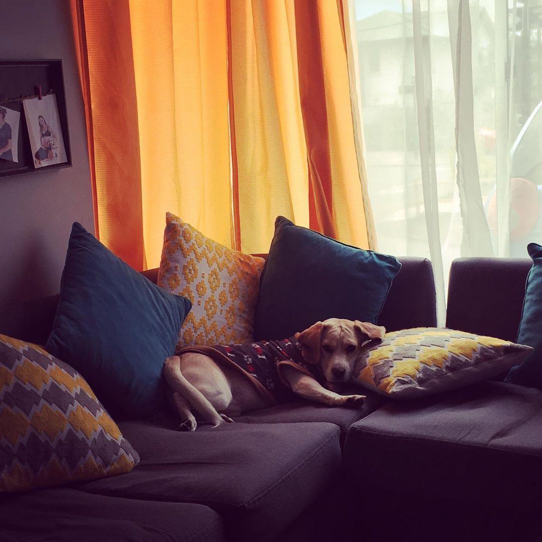 Dia nublado!  Asi que a flojear  #beaglebicolor #beaglechile #beaglesofinstagram #beaglelove #beagleworld...