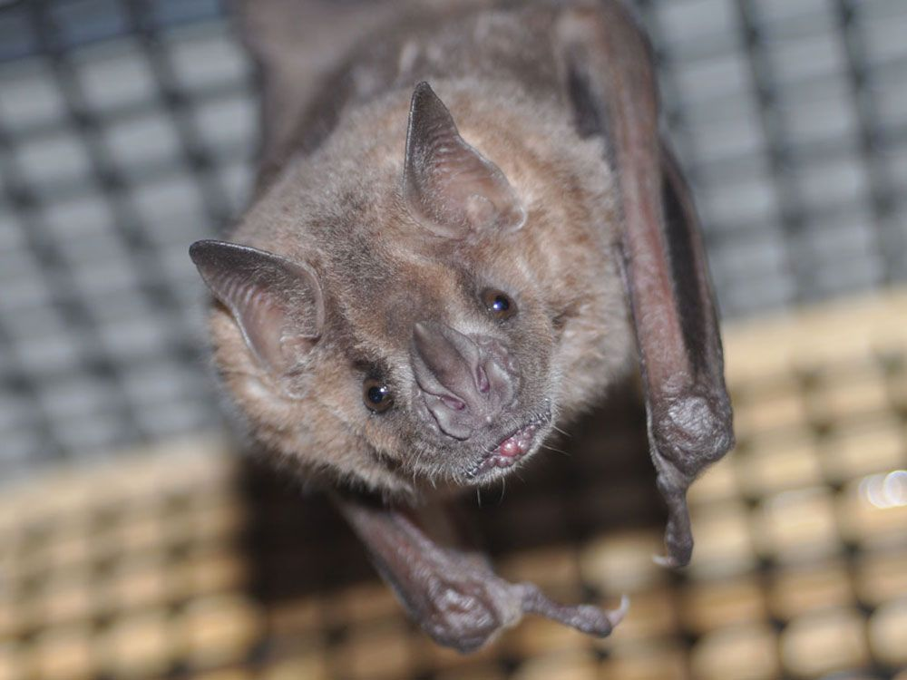 Elegant Bats In Basement